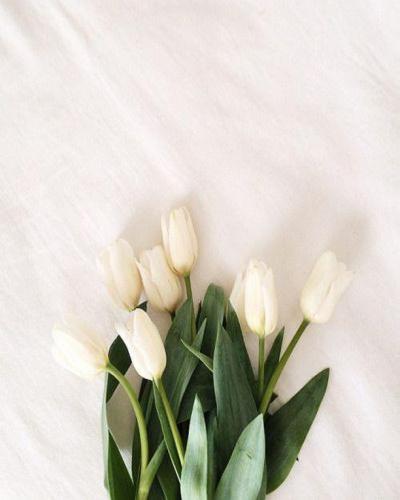 HELLO MARCH 🌿  Pour l'équipe LOVIE & Co, Mars est synonyme de l'arrivée imminente du Printemps, et on l'a bien attendu cette année.  Retrouvez notre collection Virée Printanière sur lovieandco.com . . . #hellomarch #bonjourmars #springiscoming #leprintempsarrive #joie #tulipes #passionfleurs #flowerpower #bellesemaineàvous
