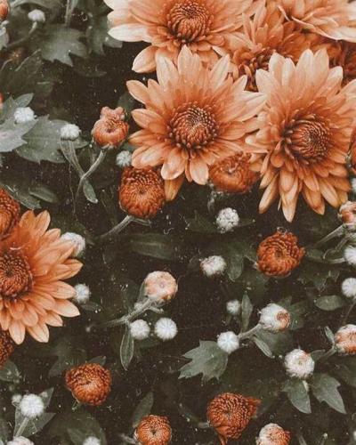 Le pouvoir des fleurs 🌺  La capsule de fin mai vous a beaucoup plu, et vous avez été plus de 65% à nous dire préférer les imprimés à grosses fleurs sur un sondage réalisé en story.  Vous confirmez ce choix ? . . . #LOVIEandCo #flowerpower #summertime #spreadlove