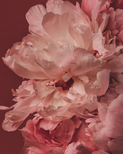 Des fleurs de pensées à tous aujourd'hui !   #LOVIEandCo #SS20 . . . . #inspiration #flowers #bouquet #pivoines #peoniesbouquet #poetry #lifestyle #Parisvibes #parisianchic #parisianlifestyle #minimalstyle #laparisienne #love